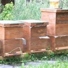 Vand familii albine - Apicultura