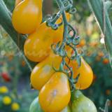 Seminte tomate cherry galbene - PERUN - 30 seminte/plic