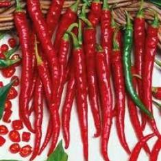 Seminte ardei iute chilli
