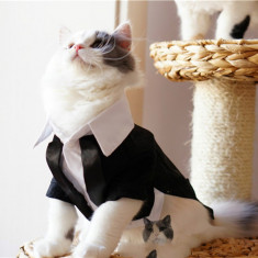 Costum nunta pt. pisica / catel haina pisici catelus catei caine caini +CADOU!