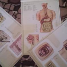 Vand planse anatomia corpului uman in relief