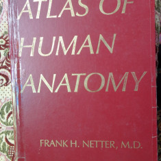 Atlas of human anatomy- Netter