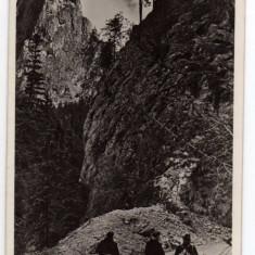 CHEILE BICAZULUI ANIMATA, STAMPILA DREPTUNGHIULARA SICULENI BEKAS SZOROS OLTARKO - Carte Postala Transilvania dupa 1918, Circulata, Fotografie