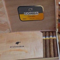 Cohiba Esplendidos(25 buc) Import Cuba Gust Intens Tarie Medie - Trabuc