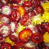 Imortele ( flori de pai)