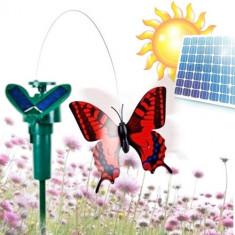Fluture cu energie solară