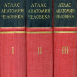 P.D Sinelnikov - Atlas de anatomie umana - 439510