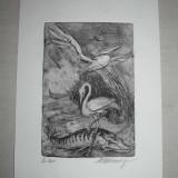 Tablou, Animale, Cerneala, Realism - GRAVURA MARCEL CHIRNOAGA- PESCARESC