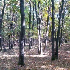 Padure stejar - 10 Ha - Teren de vanzare, 10000 mp, Extravilan