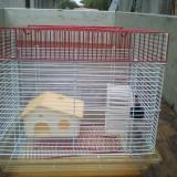 Colivie hamster