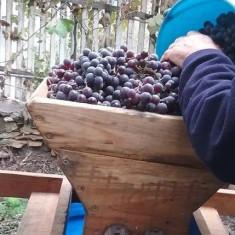 Vin de Sarichioi, via lui Isai - negru, natural, fara adaos de zahar, Romania, Demisec