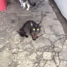 Vand pisic cu blana matasoasa